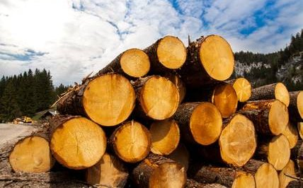 Ireland timber prices