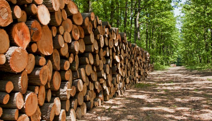 Positive outlook for forestry sector