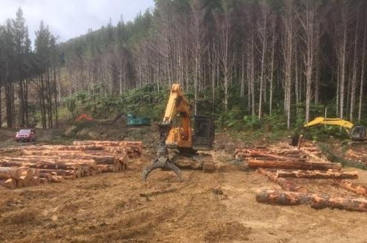 Chinese government-owned forestry firm prepares to log young trees and ship them offshore