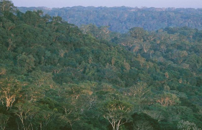 Timber species face extinction