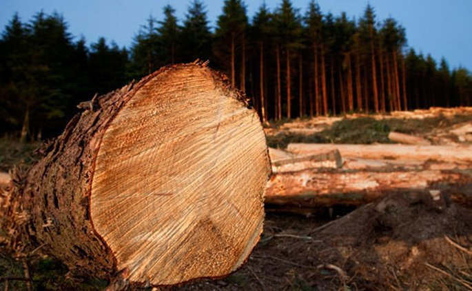 Global demand fuelling NZ forestry export growth