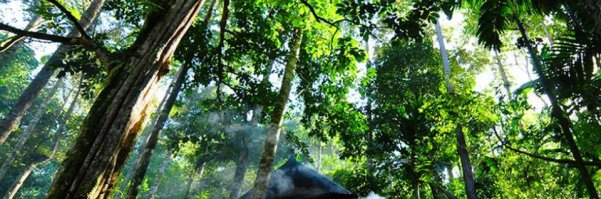 Forest Initiatives Announced in Bonn Target Sustainable Management, Emissions Reductions