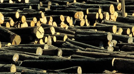 Six Asian countries regulating timber imports