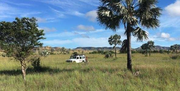 Scientists dispute missing dryland forests