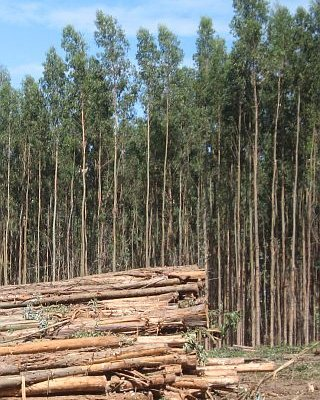 New smartphone app to model in-forest log drying