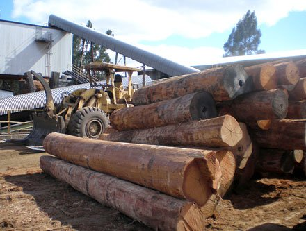 Australia increasing log exports