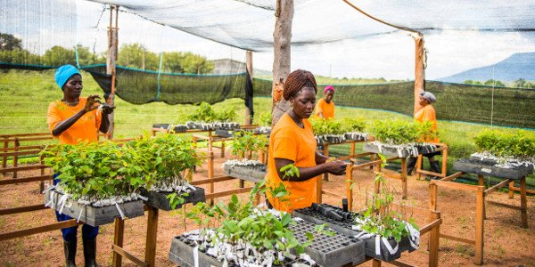 Developing sustainable forest ecosystems in Africa will help boost its economies