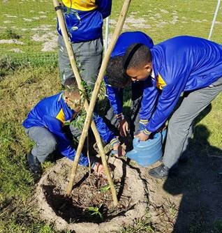 Celebrating Spring Day: Planting 30 saplings at Steenberg High School