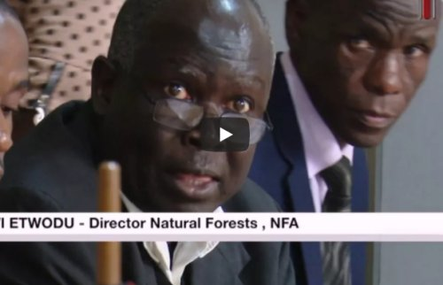 Forestry Authority to invest 140 billion shillings in forest plantations