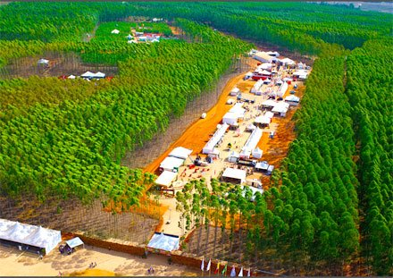 Brazil to host dynamic forestry fair