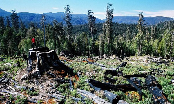 Tasmanian election: on all sides, forestry is the issue that dare not speak its name