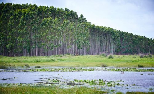 Protecting our world's water factories - how the forest products sector is leading the way