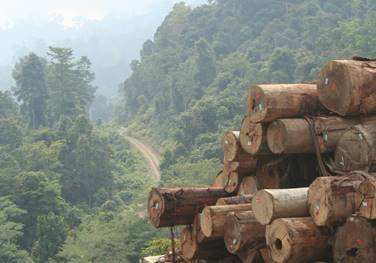 EU sustainable timber sourcing could protect over 5 million ha of tropical forest – report