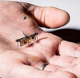 Tiny RoboFly could sniff out forest fires