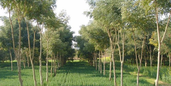 Agroforestry key in climate change fight