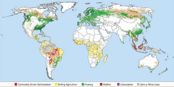 Conflicting data on deforestation