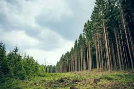 Increasing forest plantations with insurance premiums