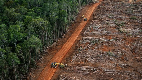 Conflicting Data: How Fast Is the World Losing its Forests?