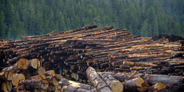 Canadian forests are under-harvested, says MEI