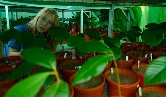 'Specialized' microbes within plant species promote diversity